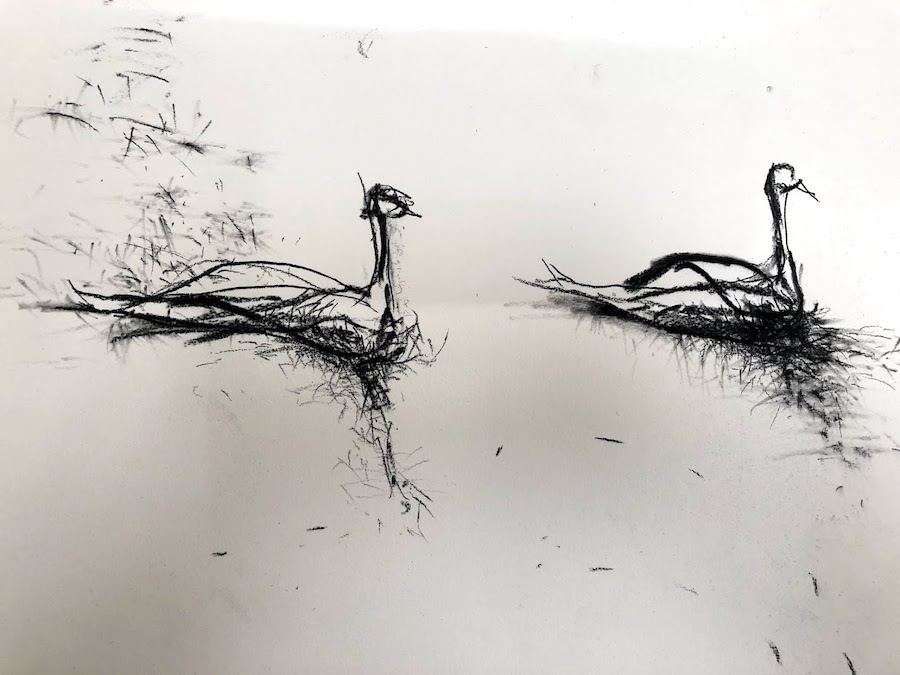 Swans Vs. Ducks detail