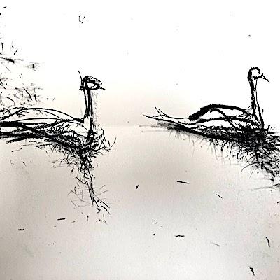 Birds Vs. Us