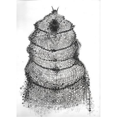 Radiolaria Drawings